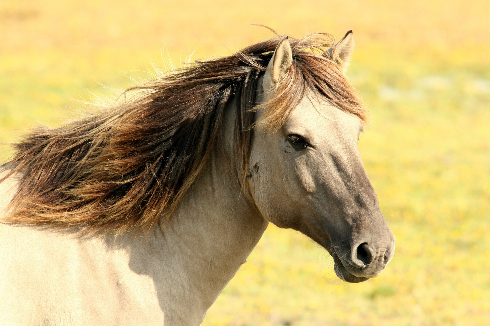 horse-197199_1920